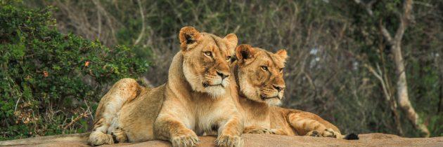 Afrique du Sud : une destination de choix pour un safari