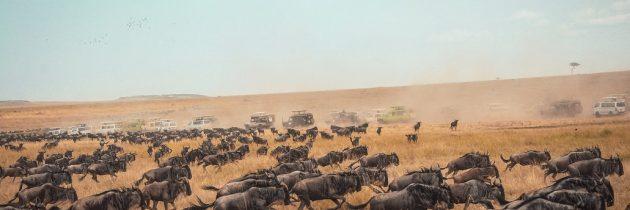 Bons plans pour un voyage hors du commun en Afrique