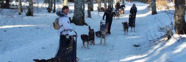 Le grand Nord avec Mush and Rando activités chien de traineau vercors