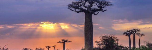 Lisez ce guide avant d'effectuer votre voyage à Madagascar