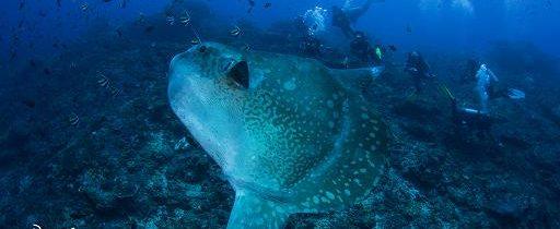 4 sites pour plonger à Bali