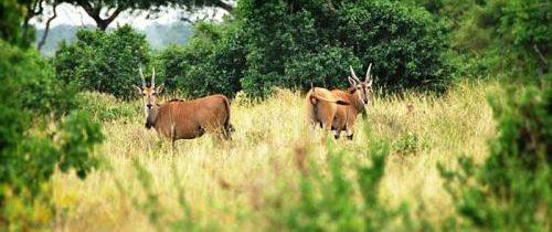 Où partir en Tanzanie pour voir plus d'espèces animales ?