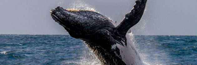 Voyage et aventure : Les baleines débarquent à Madagascar !