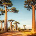 Découvrir la faune et le paysage de Madagascar