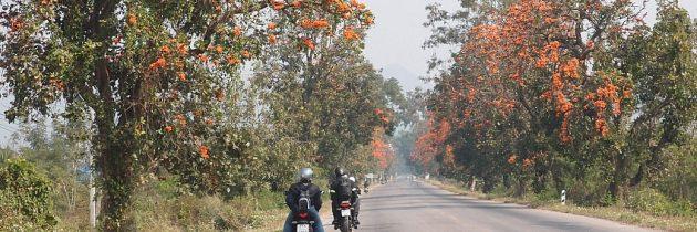 Passer des séjours originaux en Thaïlande et au Laos