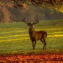 Voyager et chasser: voici un petit guide de la chasse au cerf