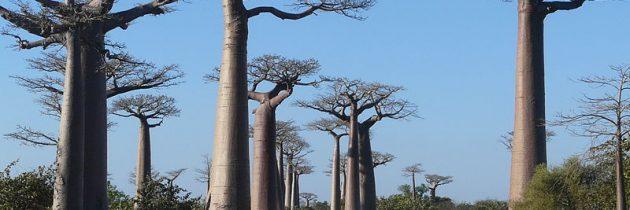 Tourisme durable et responsabledurant son voyage à Madagascar