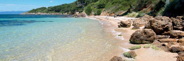 L'île de Porquerolles : une destination pleine de surprises